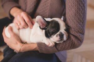 לאמץ כלב- סיפור אהבה